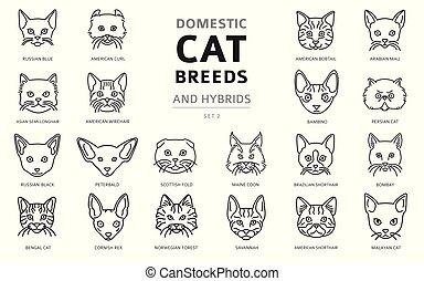 simple, portraits, hybrides, ensemble, chat, cat`s, conjugal...