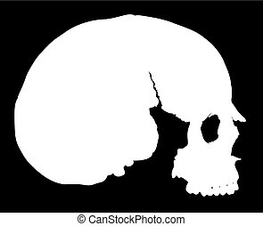 simple skull in profile - simple human skull without...
