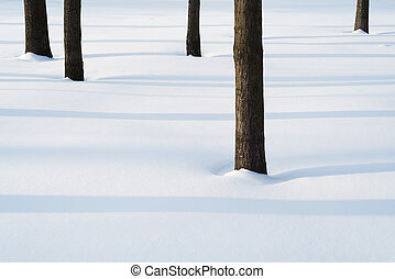 Simple winter landscape with trees in the park