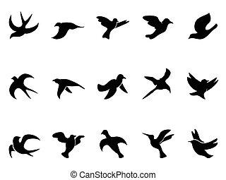 simples, pássaro, silhuetas, voando