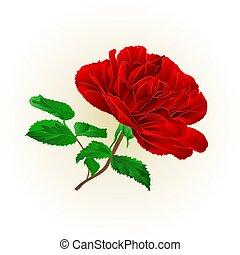 simples, rosa, folhas, vector.eps, caule, vermelho