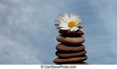 simplicity - blossom and sky
