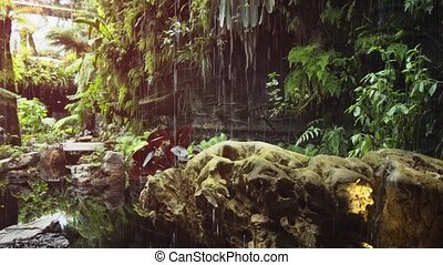Simulated Rain Waters Plants in the Cloud Forest - Simulated...