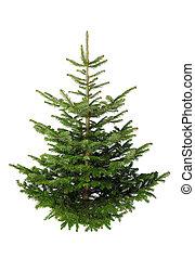 sin, árbol, ornamentos de navidad