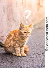 sin hogar, gatito, se sienta, en, el, asfalto