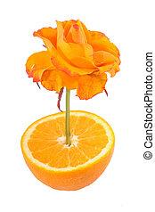 sinaasappel kwam op, vrijstaand, mooi