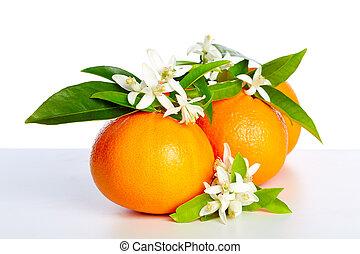 sinaasappel, met, oranje bloesem, bloemen, op wit