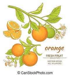 sinaasappel, vector, set