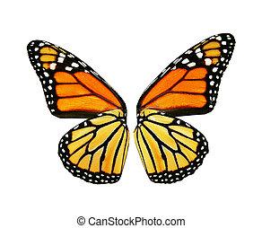 sinaasappel, vlinder, vleugels