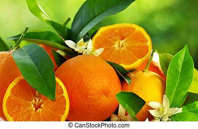 sinaasappel, vruchten, en, bloemen