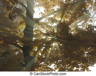Sinbeam, branch, tree