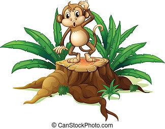 singe, feuilles, souche, debout
