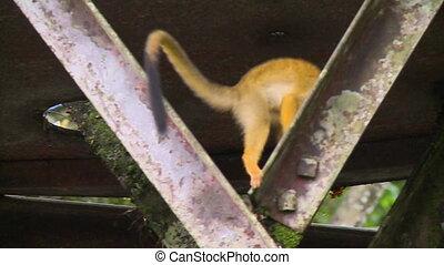 singe, haut, araignés, faisceau, autre, ramper
