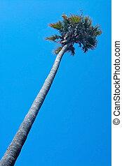 singel, palm trä