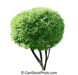 singel, träd