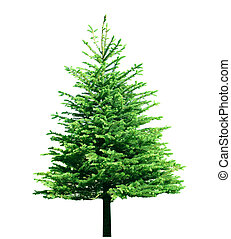 singel, träd, fura
