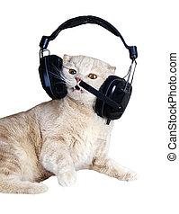 Singing cat or kitten in headphones listening