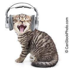 Singing funny cat or kitten in headphones listening music -...