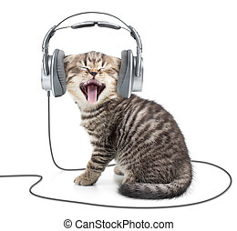 Singing kitten cat in wired headphones listening to music