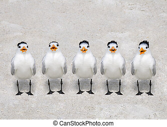 Five royal terns standing side by side on a sandy beach.