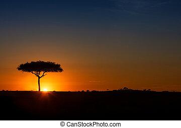 Single Acacia Tree on Horizon at Colorful Sunset