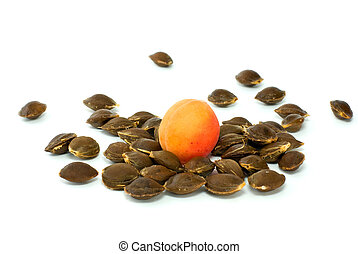 Single apricot over some kernels isolated on the white...