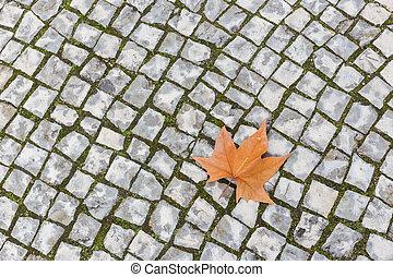 Single autumn maple leaf lying on the stone pavement.