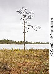 Single bare tree at the edge of marsh lake