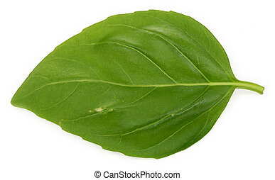 single basil leaf - macro of a single basil leaf against...