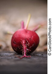 Single Beetroot