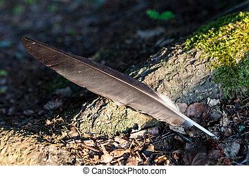 Single bird feather on ground at forest - Single bird ...
