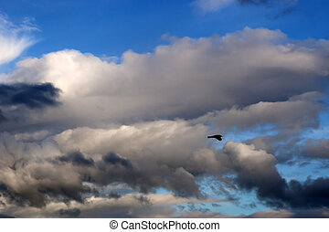 single bird flying in the clouds