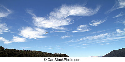 Single Bird in Patagonia Sky - A bird flying alone in the ...