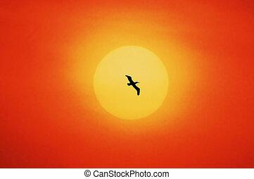 single bird in the sundown