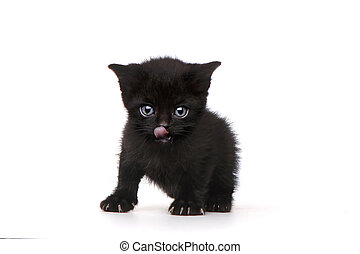 Single Black Kitten on White Background With Big Eyes
