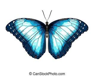 Single Blue Butterfly morpho on a white background.