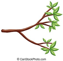 Single branch with green leaves