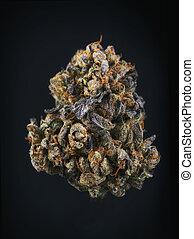 Single cannabis bud (berry noir strain) isolated on black -...