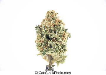 Single cannabis bud (ob reaper strain) isolated on white -...