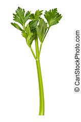 Single Celery Stalk isolated - Single Celery Stalk. This...