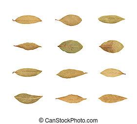 Single dried bay leaf isolated