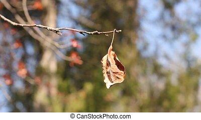 single dry leaf