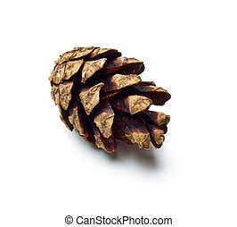 single dry pinecones isolated on white background