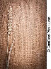 single ear of wheat on oak wooden board with copyspace