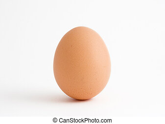 A single egg isolated on a white background
