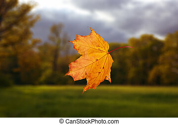 falling autumn leaf