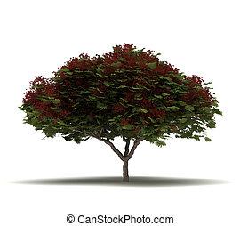 Single Flame Tree