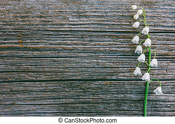 single flower fragrant Lily of the valley on grey wooden retro background in the cracks with copy space
