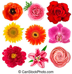 Single flower heads. Lily, orchid, ranunculus, sunflower,...