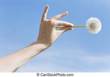 single flower on woman palm on a background of a blue sky